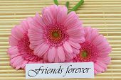 pic of  friends forever  - Friends forever card with pink gerbera daisies - JPG