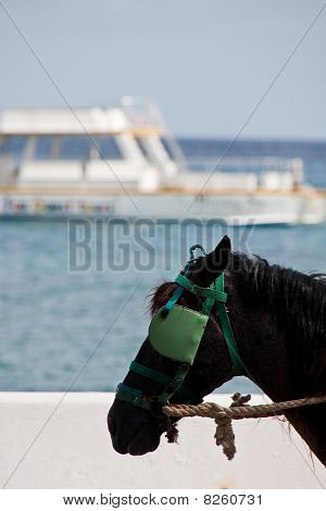Horse By The Ocean
