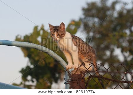 Cute Spotted Kitten Sits High On The Fence