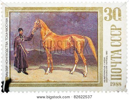 Stamp printed in USSR, shows Sardar, an Akhaltekinsky Stallion,
