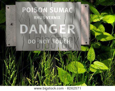 Poison Sumac (Rhus Vernix)