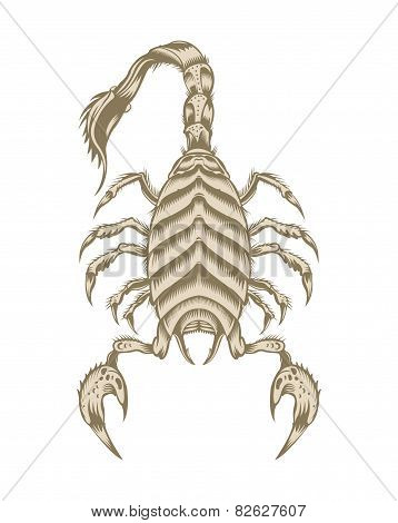 Illustration of scorpion.
