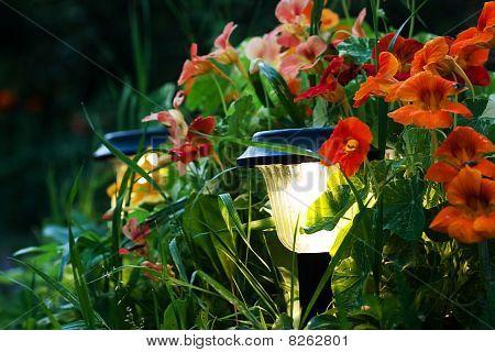 Linternas en un jardín
