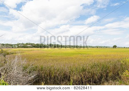 Gold And Green Grass In Wetland Marsh