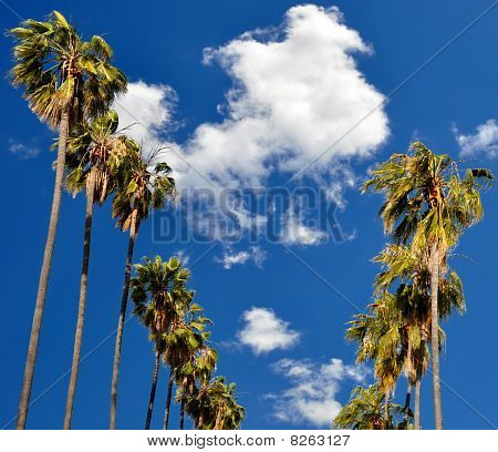 Palms Of Pasadena From 339