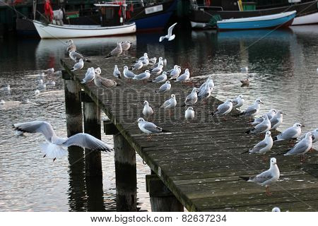 Pier With Seagulls