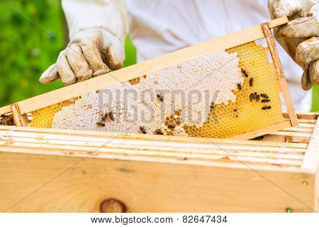 Female beekeeper controlling beehive and comb frame