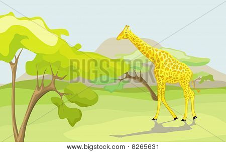 Giraffe In The Wild Nature