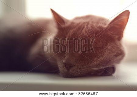 gray cat sleeps on window