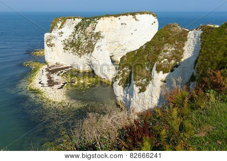 Chalk rock Old Harry Rocks Isle of Purbeck in Dorset south England UK