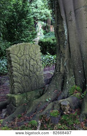 Alter Friedhof Greifswald - Devoured Tombstone