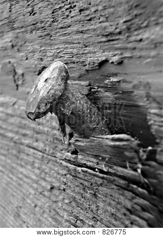 b&w nail in wood