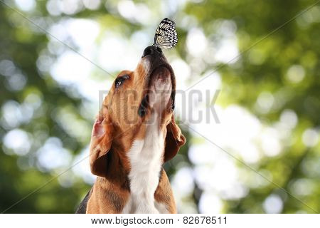 Colorful butterfly sitting on dog's nose on bright green background