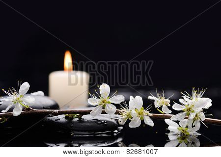 Spring peach blossom with candle on black stones