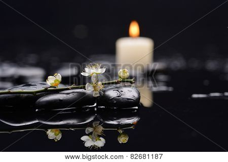 Set of cherry blossom with white candle on black stones