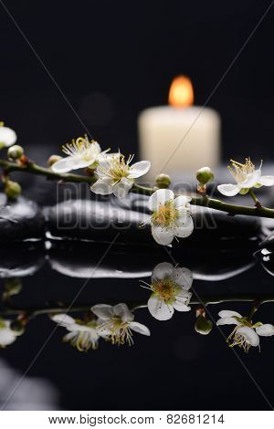 cherry blossom with white candle on black stones