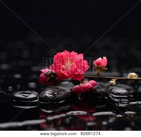 Red sakura flowers with therapy stones