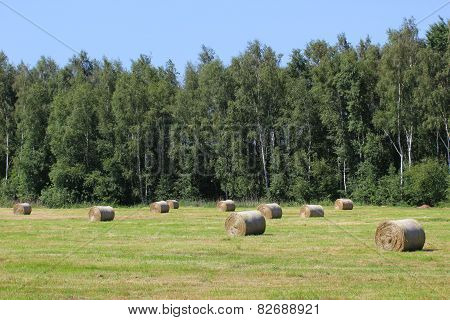 Hay Bales On Meadow
