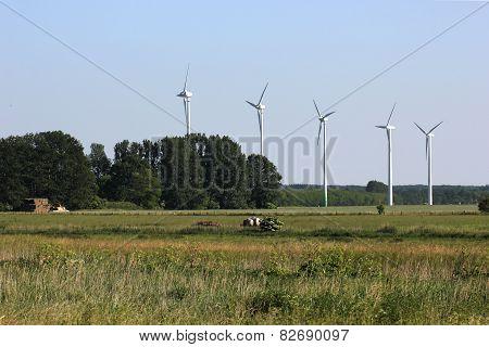 Five Wind Mills