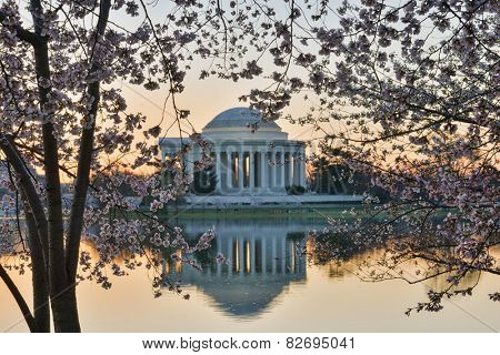 Washington DC - Thomas Jefferson Memorial during Cherry Blossom Festival at Tidal Basin.