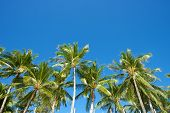 stock photo of boracay  - Blue sky with palm trees in Boracay Island in the Philippines - JPG