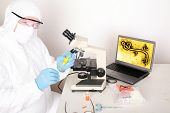 image of bio-hazard  - Laboratory examination of Ebola or Bio Hazard and Infectious Waste and Diseases - JPG
