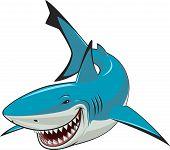 image of great white shark  - Vector illustration - JPG