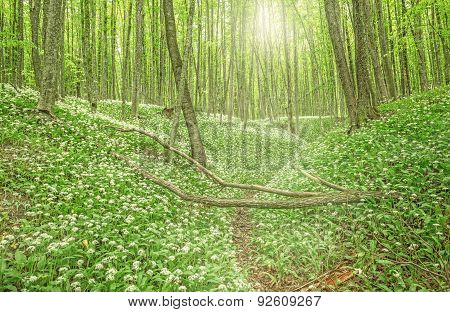 Forest At Early Morning Time.