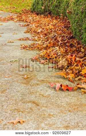 Fall leaves on pathway