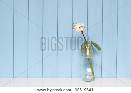 White Dry Rose Standing In The Bottle Of Water