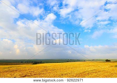 Wide Sunlit Field Harvest Wheat
