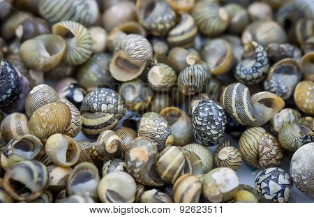 Sea Shells Collected On The Coast Of Thailand