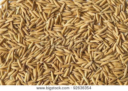 Brown Paddy Rice.