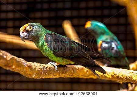 Blue And Green Parrot