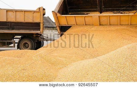 corn  heap