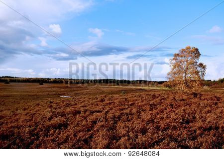 Field At Forest