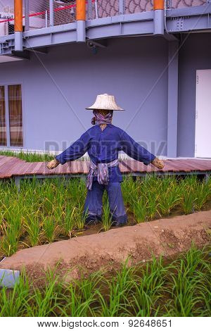 Scarecrow In The Rice Plantation