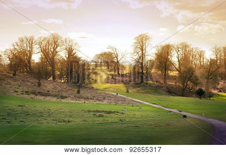 English spring forest forest