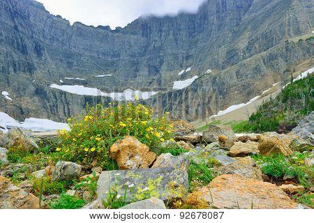 Wild Flowers By The Iceberg Lake Glacier In Glacier National Park