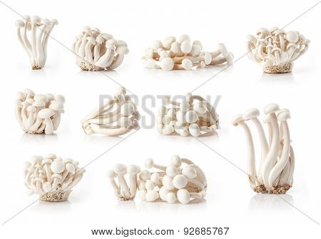 composite of fresh white mushrooms
