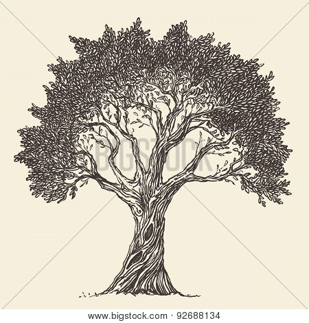 Vintage Olive Engraved Background Illustration