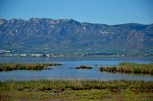 image of boggy  - View at water waterplants and mountains in the Ebro delta in Catalonia Spain - JPG