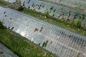 pic of hail  - Abandoned greenhouses damaged and destroyed by the hail - JPG