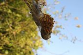 stock photo of caterpillar  - A caterpillar web suspended against backdrop of sky and trees - JPG