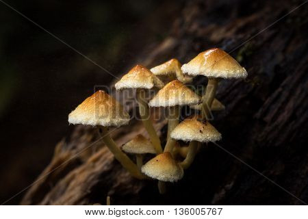 Mushroom in Da Lat's rainforest - Bidoup nui ba national park