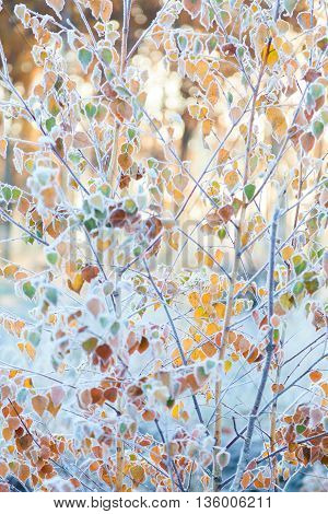 Bush Covered With Frost In The Autumn Forest