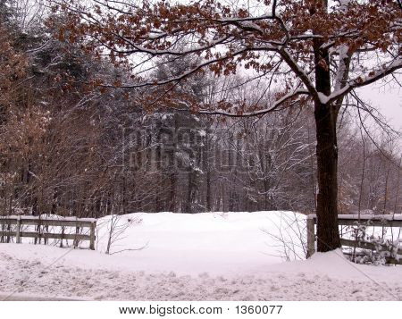 Fence And Tree With Snow