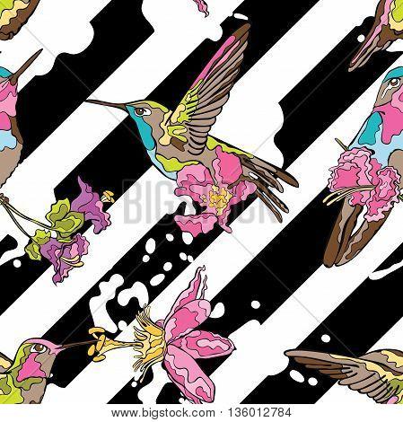 Striped background. Black and white pattern. Diagonal stripes. Birds - Hummingbird.