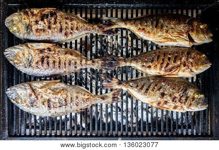 Preparing Fish On The Charcoal Grill