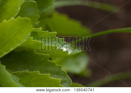 Shining drop on green leaf. Floral background